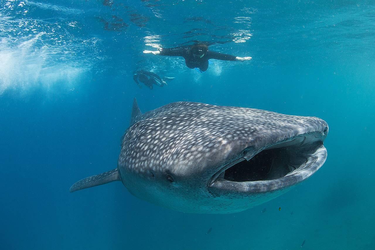 Топ 20 самых больших животных на в мире за всю историю земли