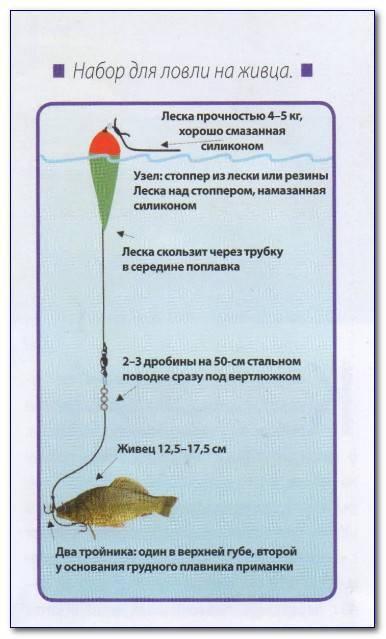 Ловля щуки на живца с берега и с лодки - рыбачок!сайт рыбачок