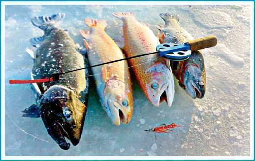 Ловля форели зимой: как правильно и на что ловить рыбу со льда, снасти и приманки