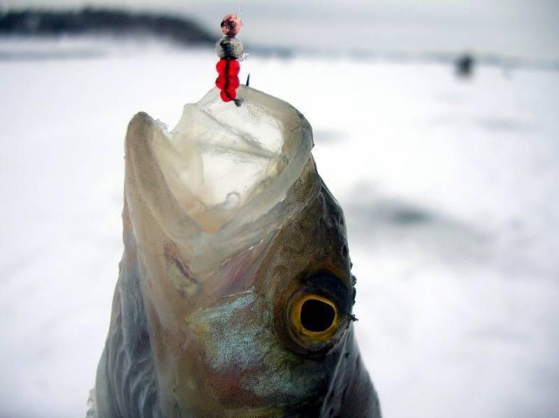 Ловля на безмотылку зимой: выбор места, техника ловли, секреты