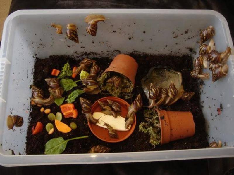 Сфагнум - строение и свойства мха, разновидности, применение в лечебных целях и для комнатных растений