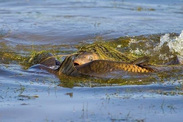 Рацион питания и особенности рыбной ловли окуня