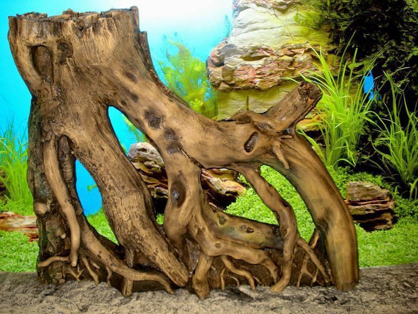 Коряги для аквариума (18 фото): дизайн аквариума с мангровыми корягами. что делать, если они красят воду? какие коряги можно использовать?