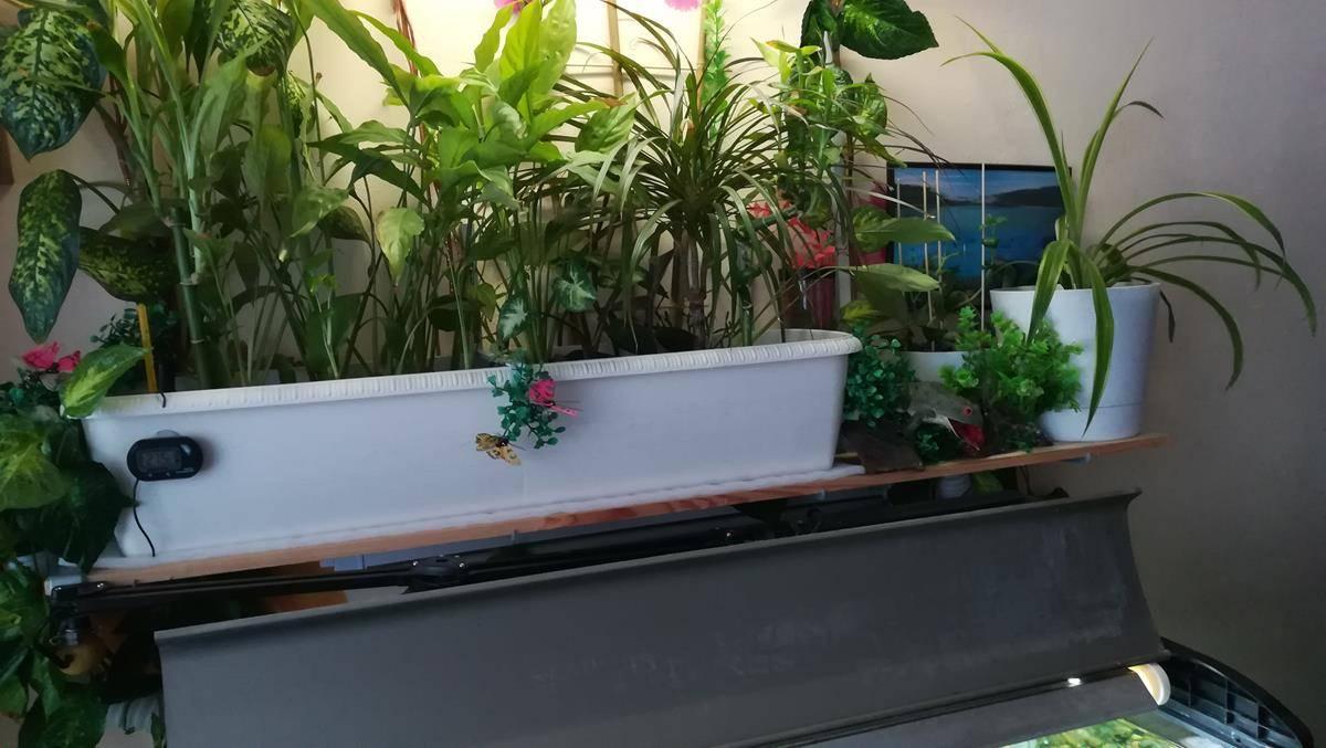 Биофильтрация воды в аквариуме или биофильтр своими руками