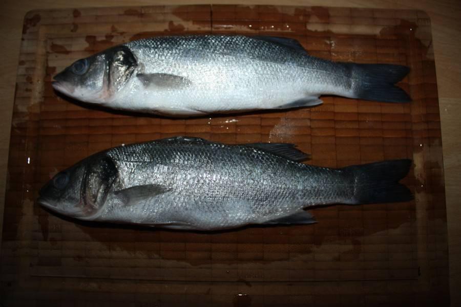 Чилийский сибас: виды лаврака, места обитания и размножение, особенности ловли рыбы