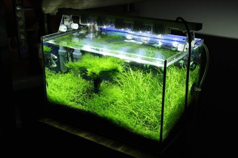 Выбираем лучший светильник для аквариума - 120 фото освещения светильника своими руками