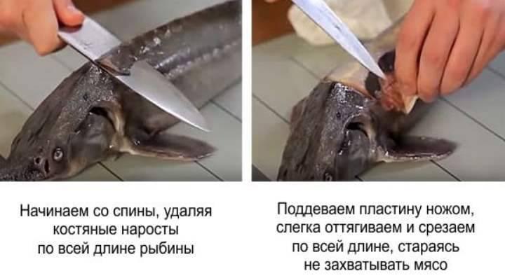 Видео как разделать стерлядь в домашних условиях - рыбалка