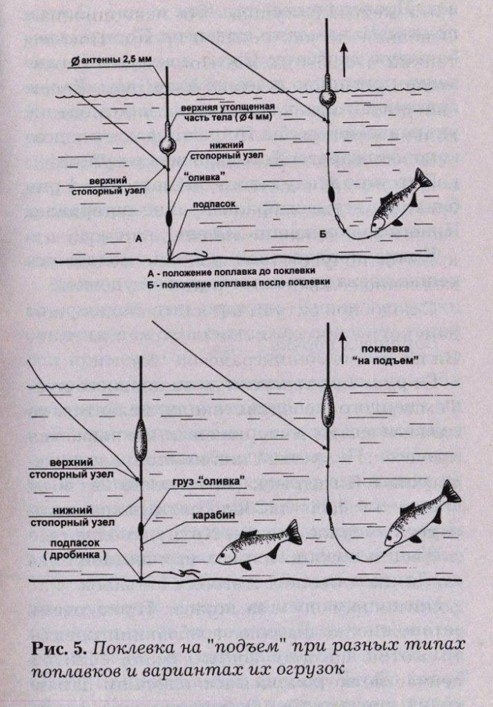 Как ловить карпов: на что клюет, выбор снастей, наживки и прикормки