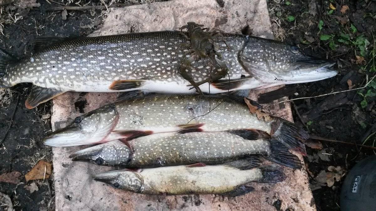 Рыбалка в пермском крае и перми: обзор рек и водоемов, запреты
