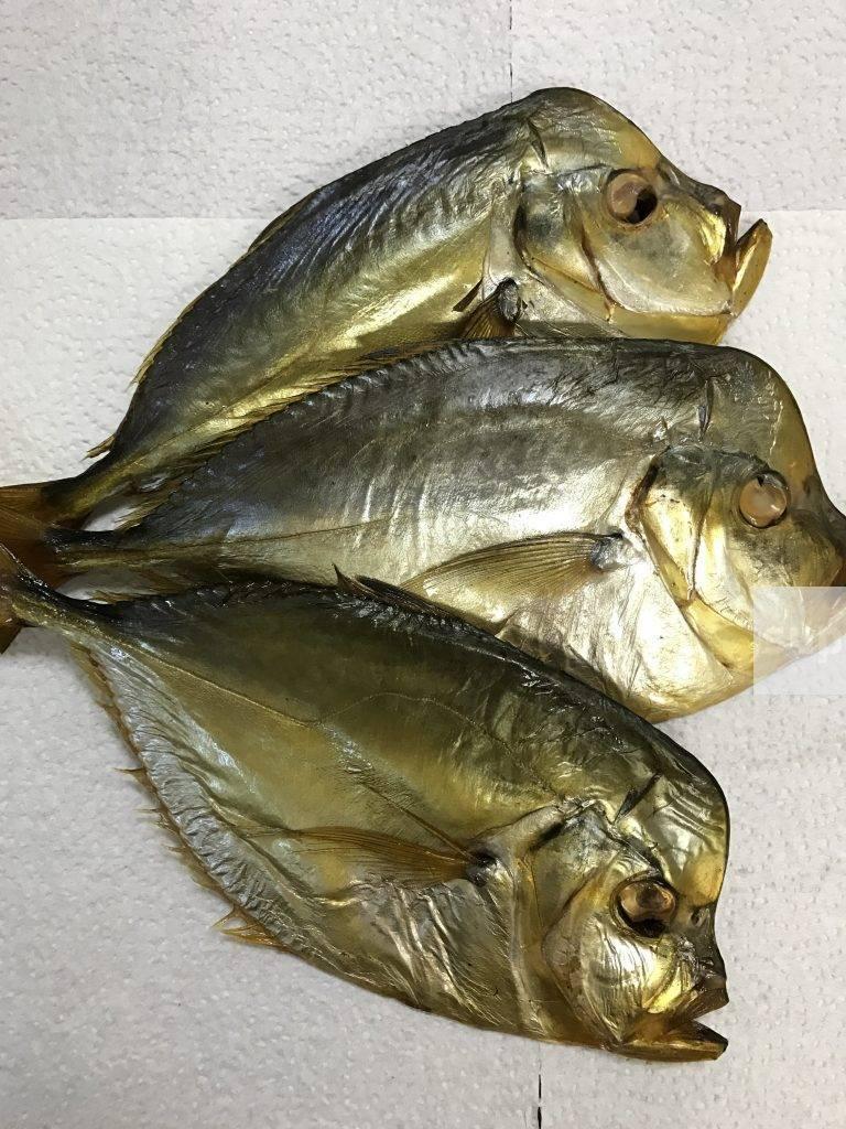 Рыба ёрш: размеры и разновидности, где обитает и чем питается, правила ловли