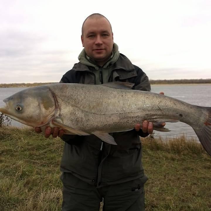 Какие виды рыб ловятся на Нижней Волге под Астраханью