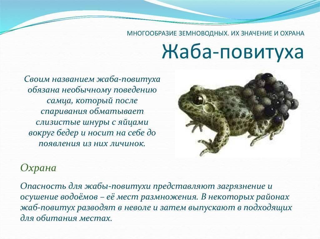 Аквариумные лягушки: виды, содержание, фото, видео