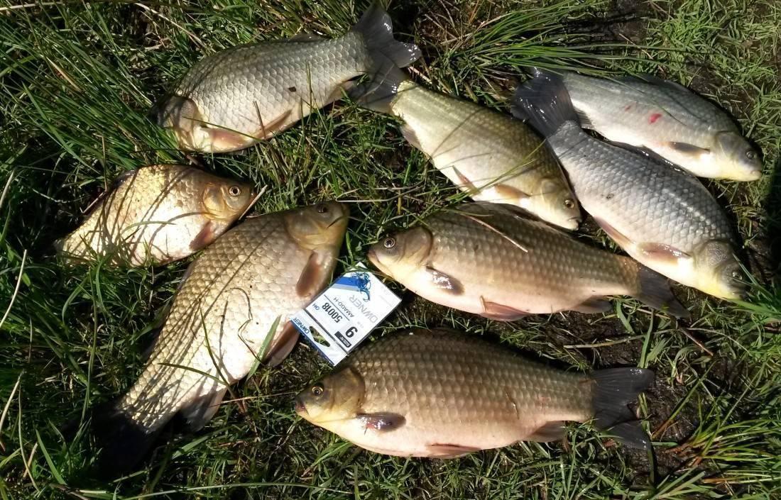 Рыбалка в витебской области: лучшие места для ловли, самые большие рыбы витебщины, видео