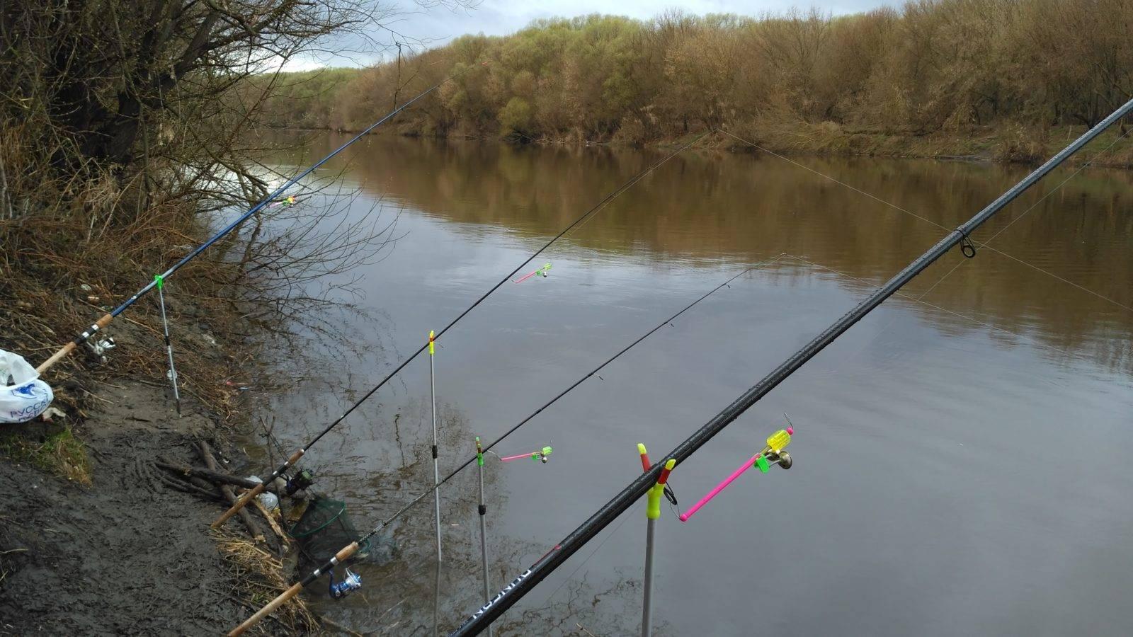 Ловля язя на фидер на течении: как правильно ловить, выбор прикормки