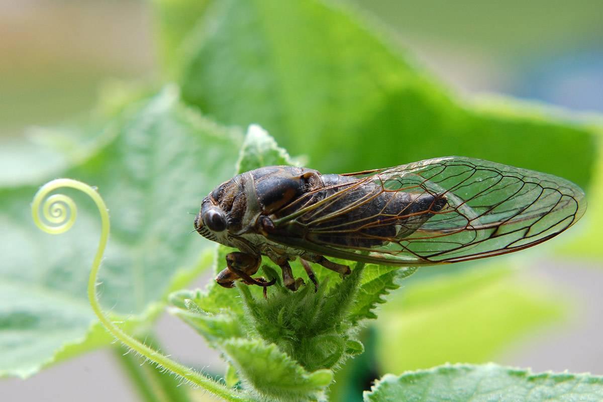 Скарабей жук насекомое. описание, особенности, образ жизни и среда обитания скарабея   живность.ру