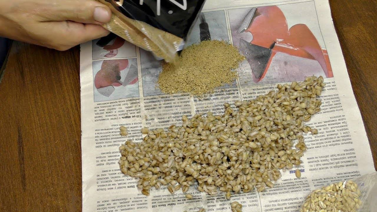 Как варить перловку для рыбалки - на карася и не только, сколько готовить?