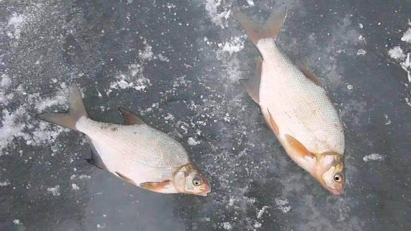 Ловля щуки по последнему льду, фото (3 видео)