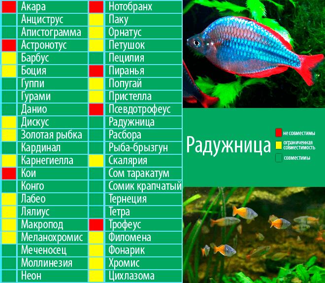 Совместимость и сочетание видов аквариумных рыбок