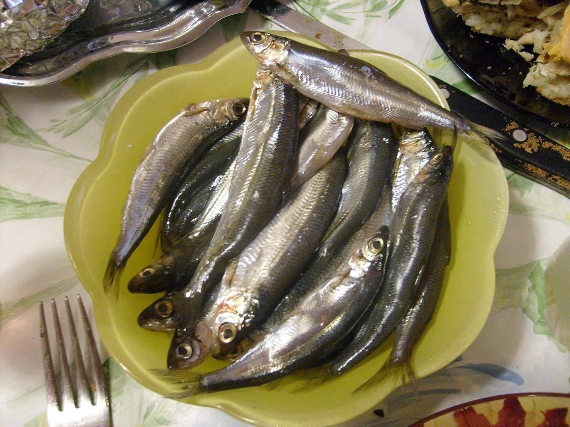 Рыба тугунок фото где водится - рыбалка