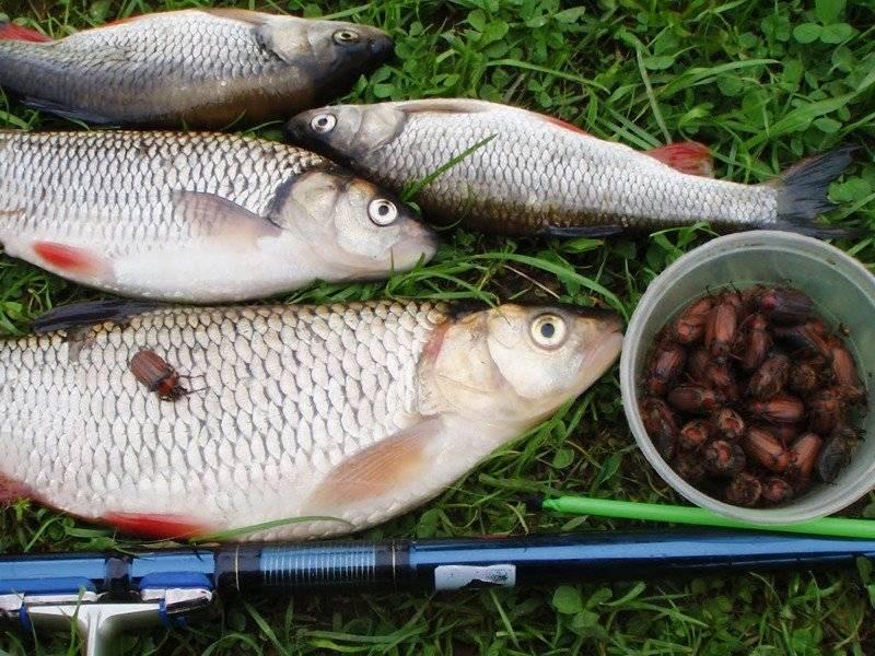 Ловля язя осенью - читайте на сatcher.fish