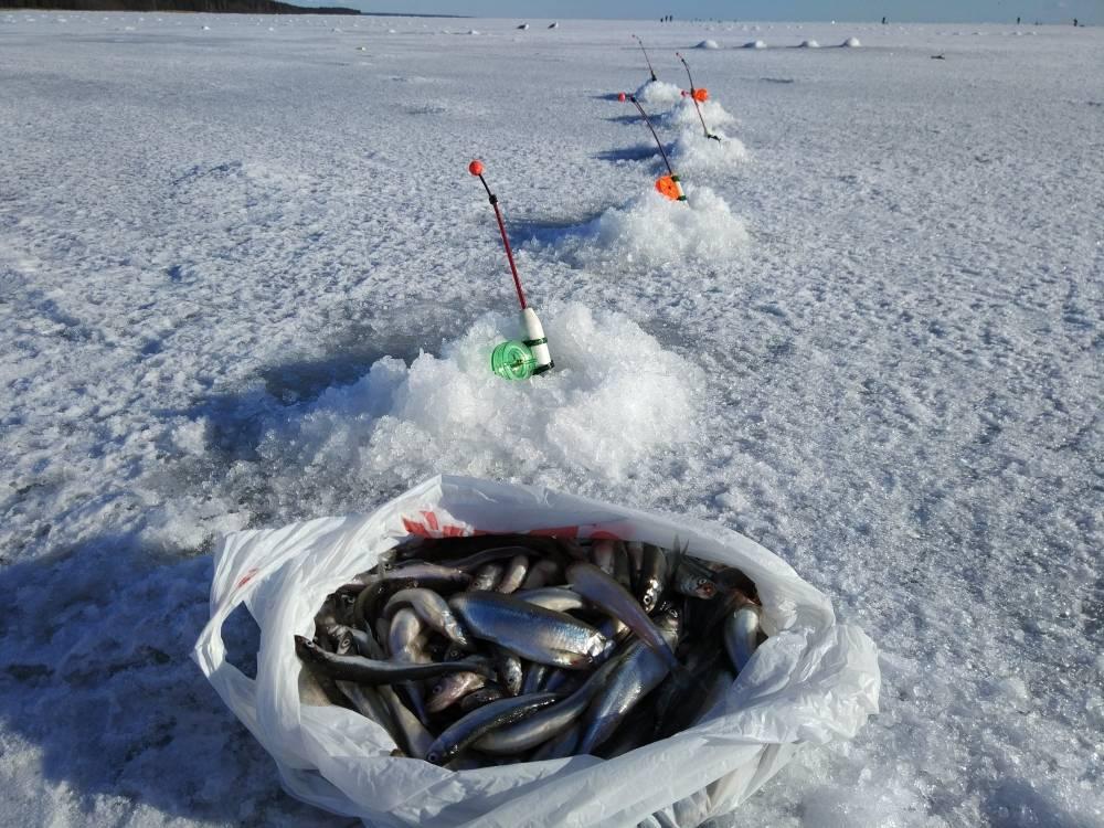 Рыбалка на финском заливе (на дамбе): отчет :: syl.ru