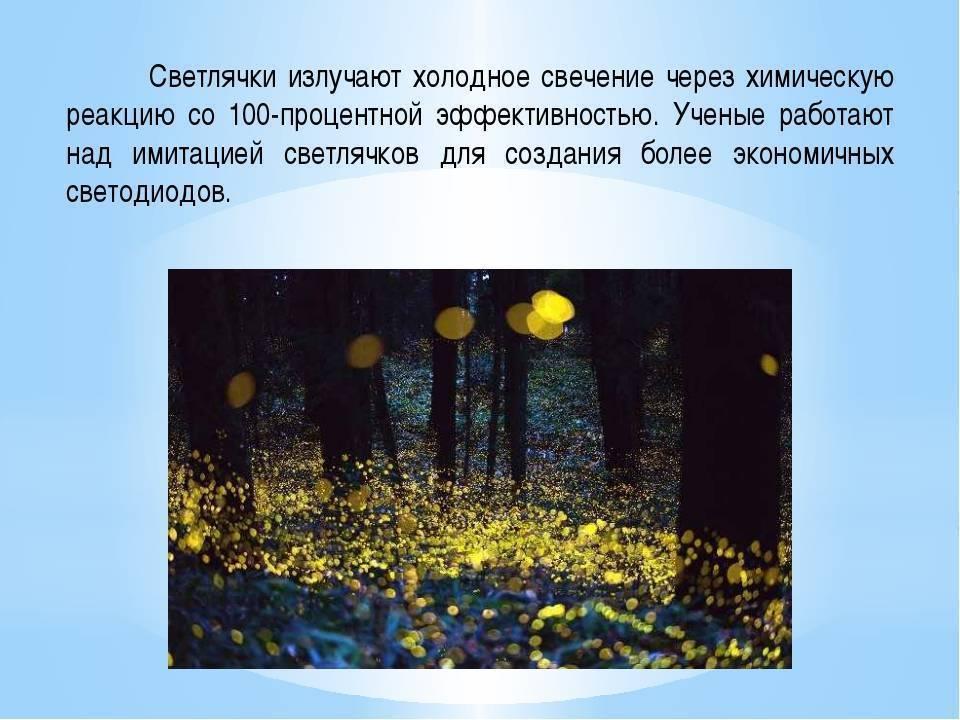 Светлячок | страна мастеров