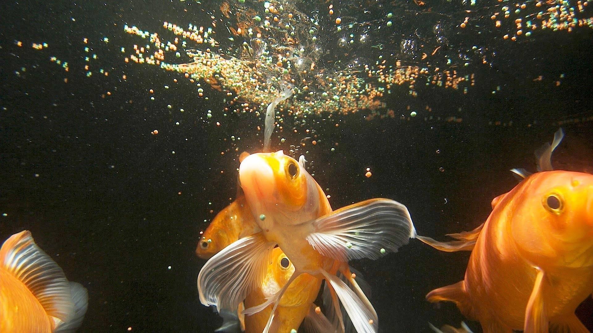 Приметы про аквариум в доме