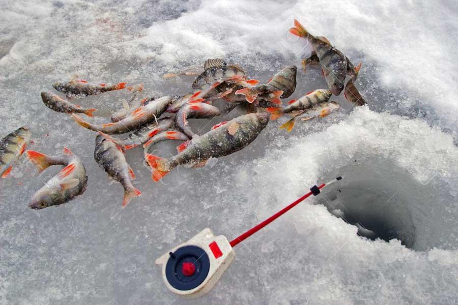 Зимняя рыбалка на окуня: приманки и снасти, тактика ловли