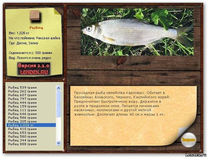 Ловля рыбца на дону осенью: про снасти и технику - рыбалка