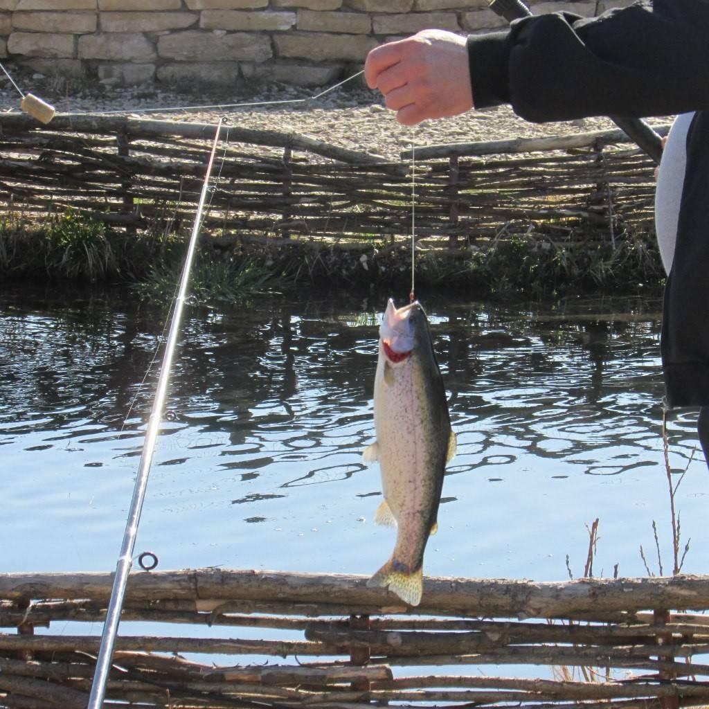 База отдыха «царская рыбалка» в кипени: какая рыба водится, услуги, особенности ловли