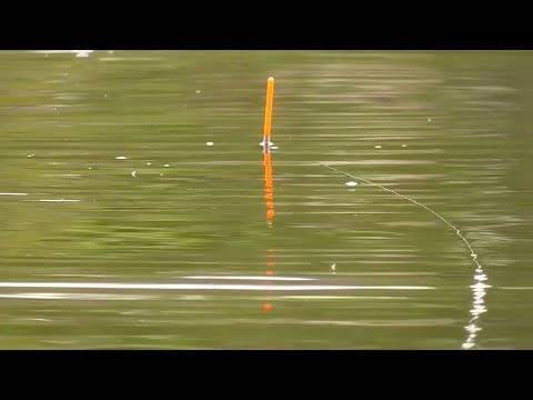 Белый амур – выбор оснастки для ловли
