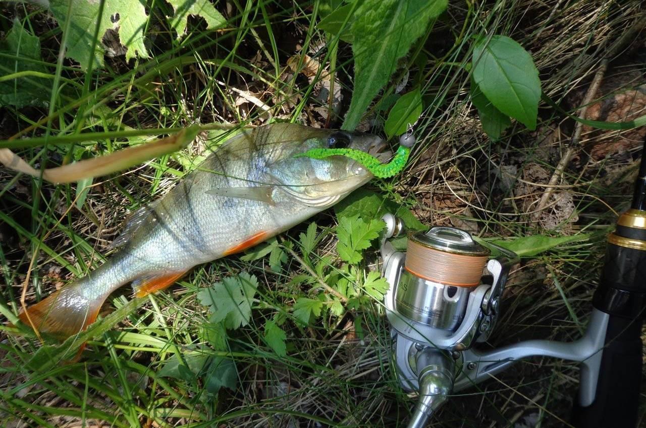 Рыбалка на щуку летом: где искать, как и на что ловить. ловля летней щуки: июнь, июль, август