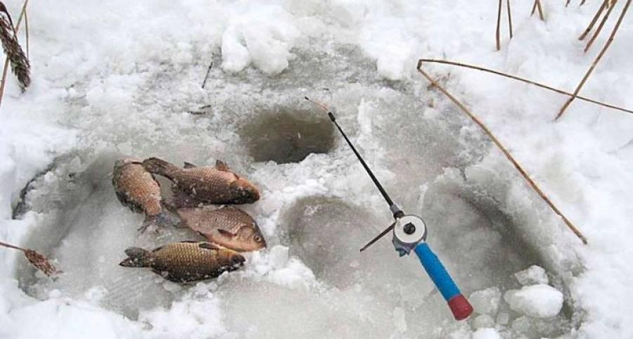 Ловля окуня в феврале: как ловить на озере зимой, техника рыбалки на блесну