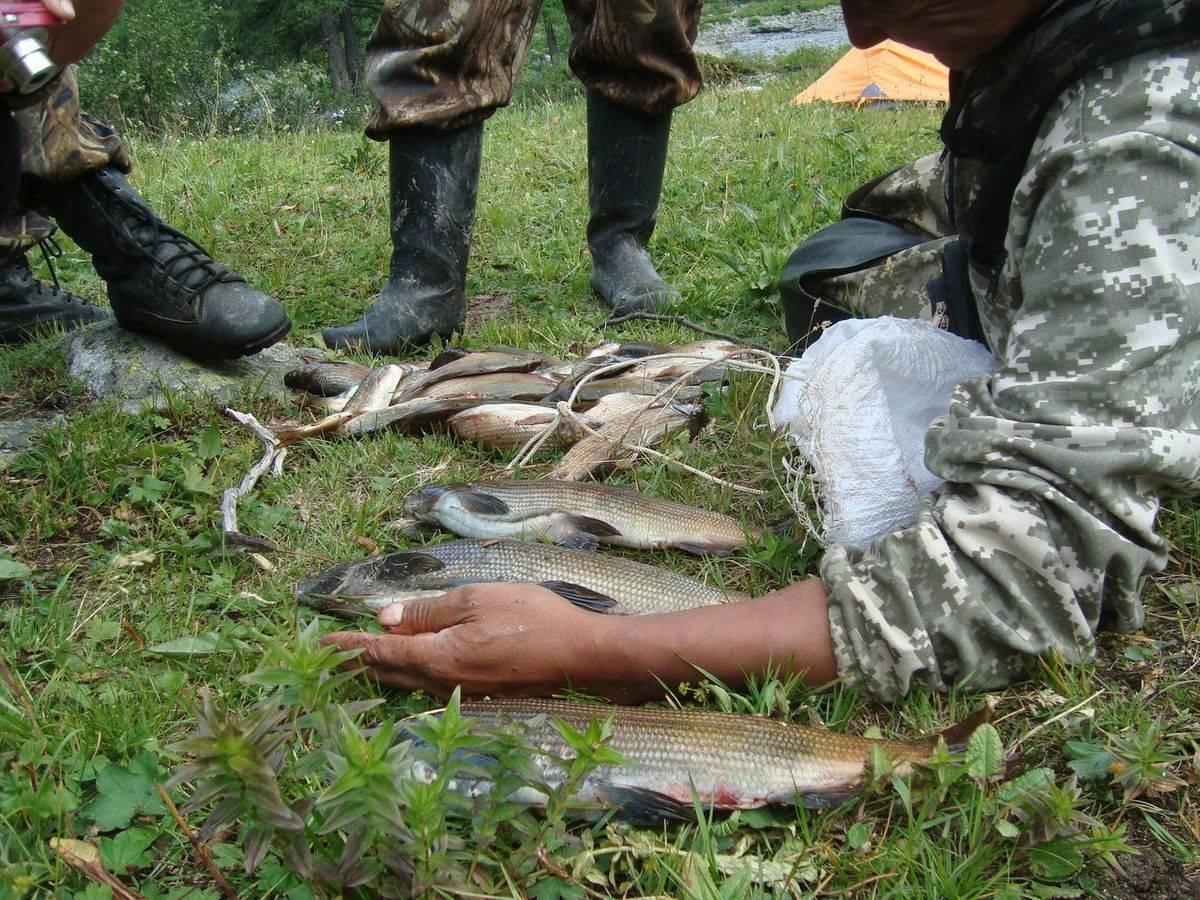 Ловля нельмы на спиннинг видео - про рыбалку