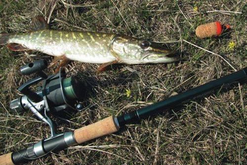 Оснастка для ловли окуня на спиннинг