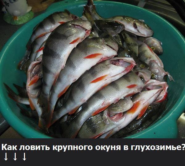Что нужно знать о рыбалке в глухозимье – рыбалке.нет