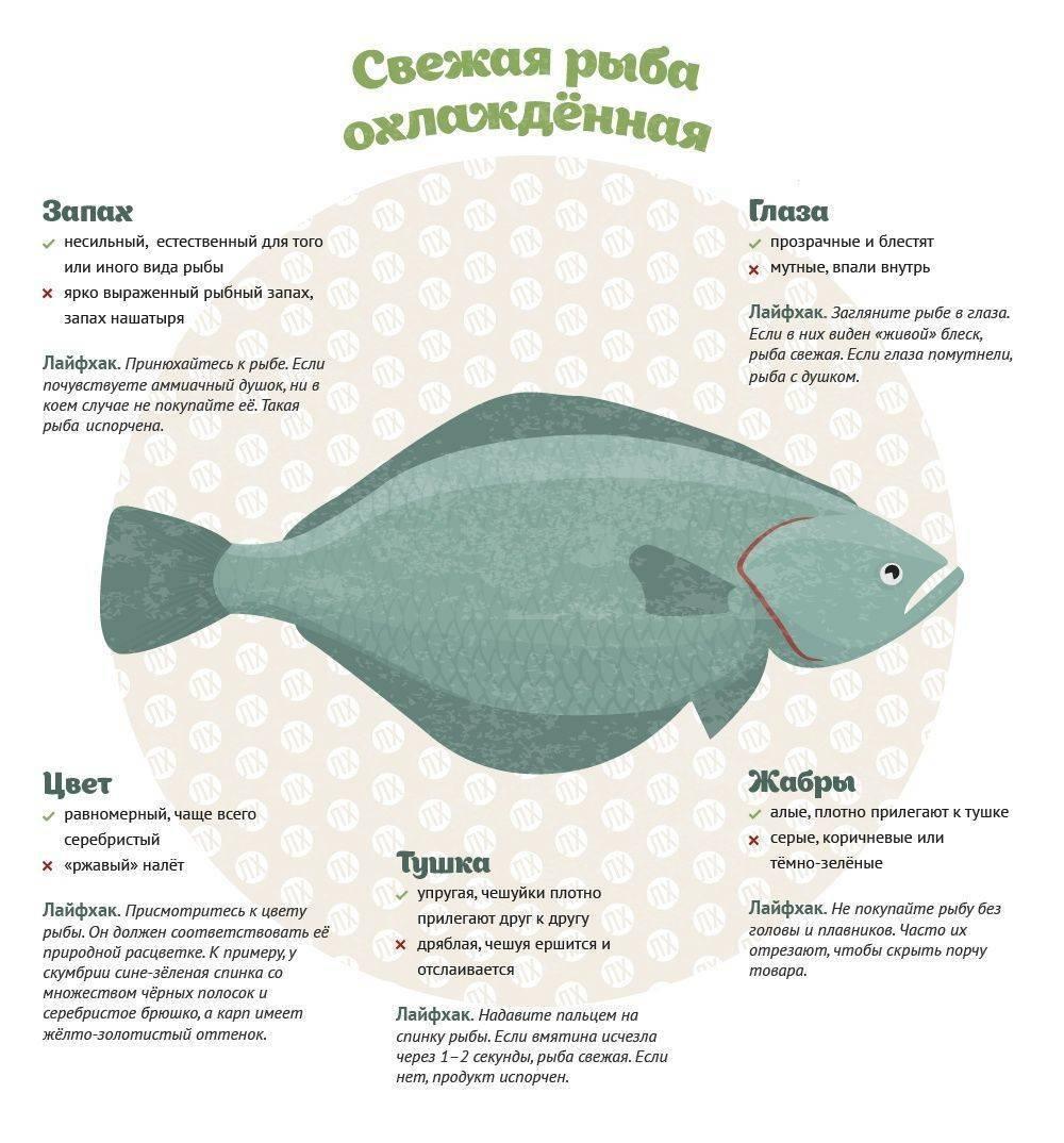 Какую рыбу лучше и полезнее кушать навагу или минтай?