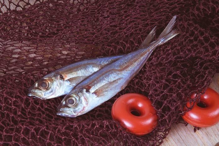 Что за рыба путассу: её польза и вред