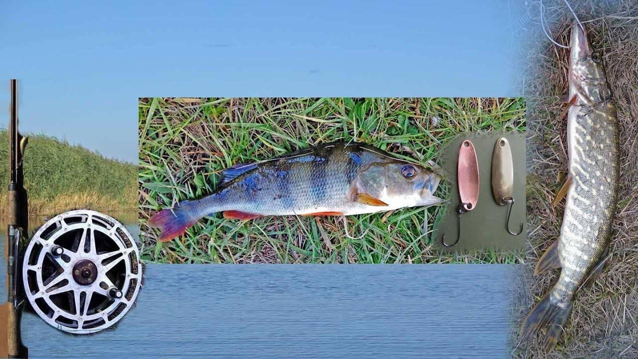 Ловля окуня на спиннинг осенью: приманки и поиск рыбы