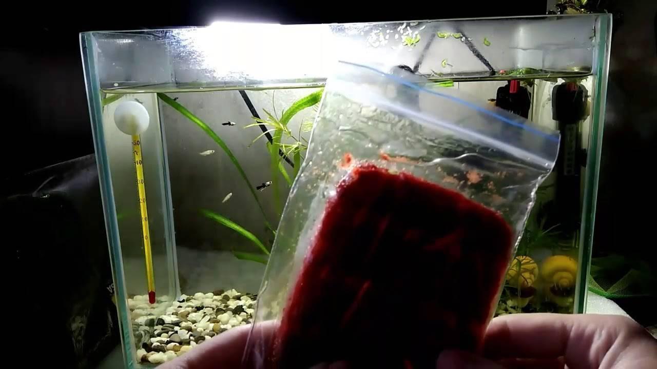 Секреты кормления аквариумных рыб. корм для рыбок своими руками