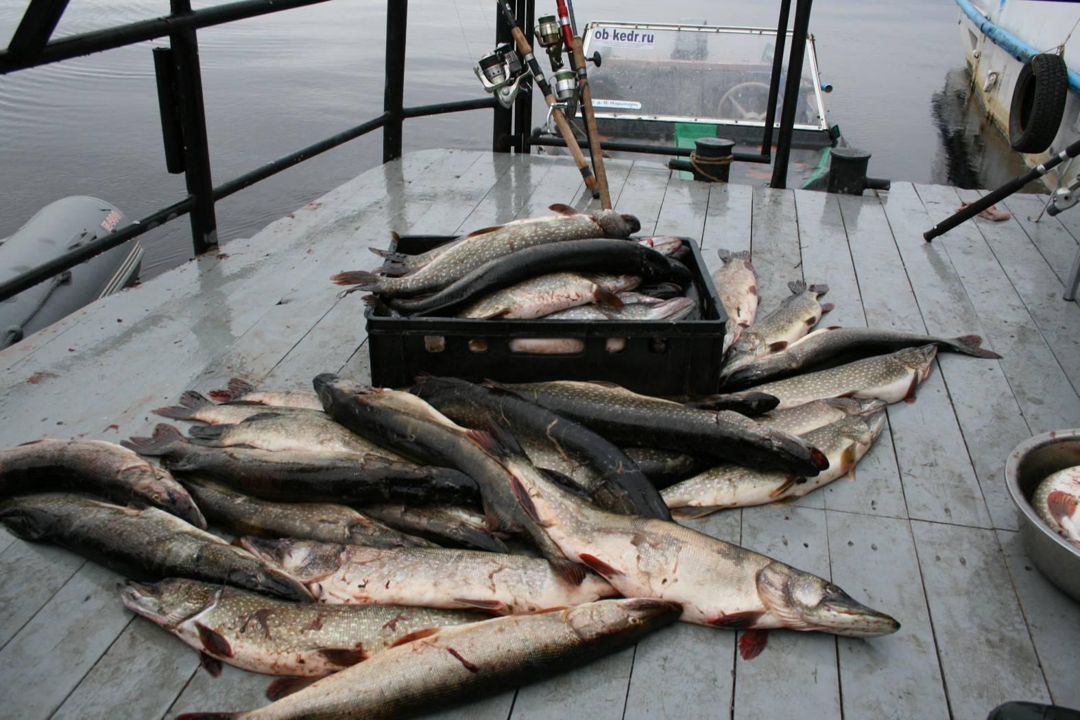 Рыбалка на оби — рыба, снасти, способы ловли