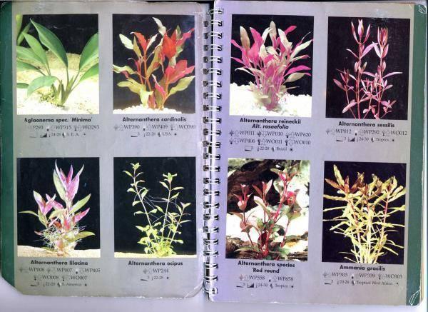 Растения для маленького аквариума.