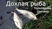 К чему снится рыба женщине, девушке или мужчине: 8 трактовок сна - сонник: рыба