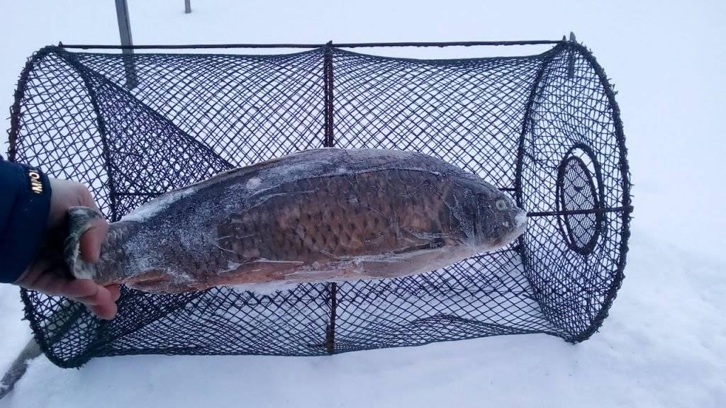 Ловушка для рыбы: как сделать своими руками из 5-литровой бутылки и сетки, заводские модели