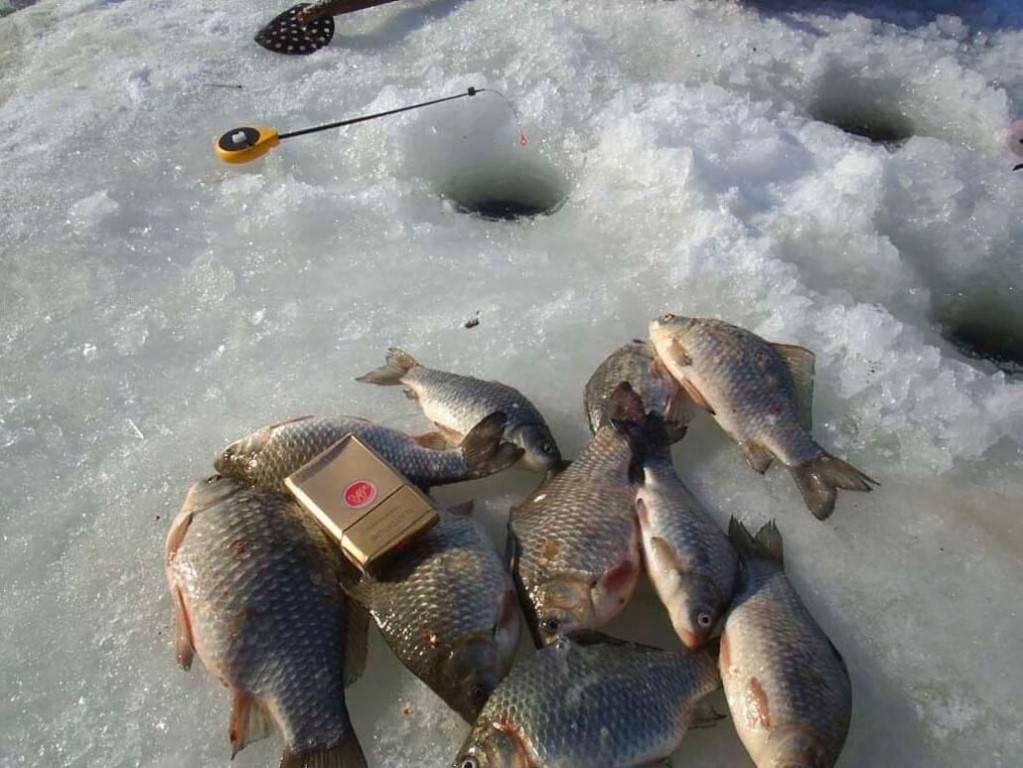 Ловля сазана зимой: где искать, как и на что ловить