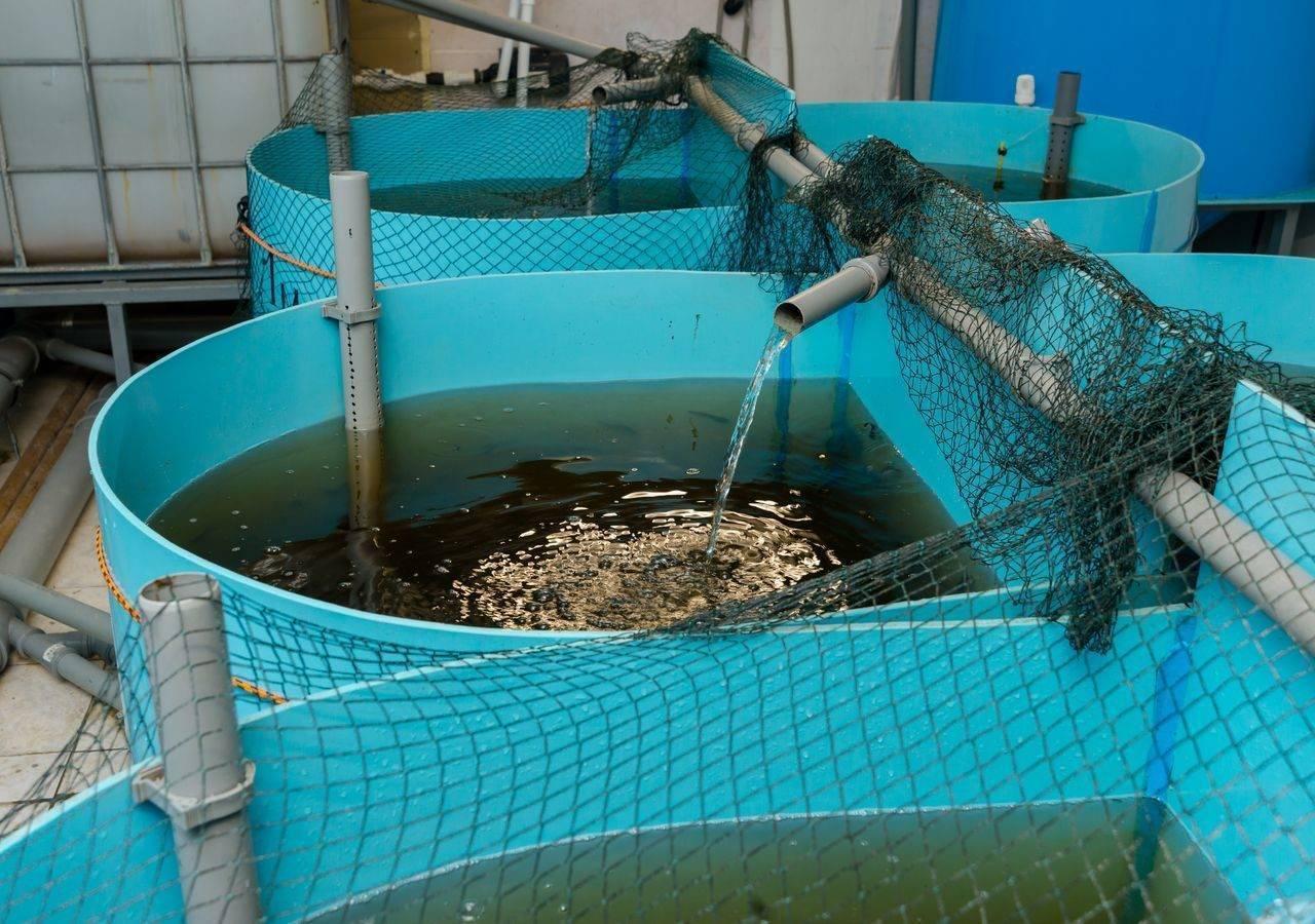 Бизнес на выращивании рыбы (октябрь 2020) — vipidei.com