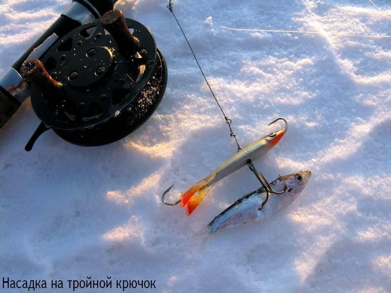 Ловля берша зимой: оснастка для ловли на тюльку, блесну, мормышку, донку и другие снасти
