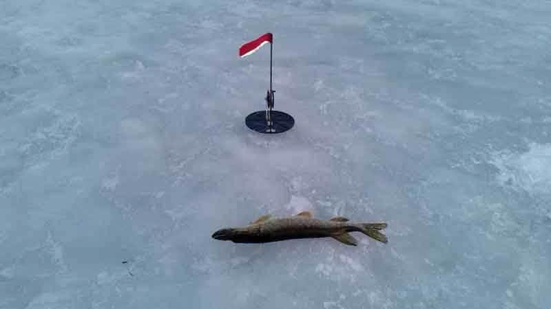 Зимняя рыбалка на щуку видео смотреть онлайн. Зимняя рыбалка на жерлицы видео