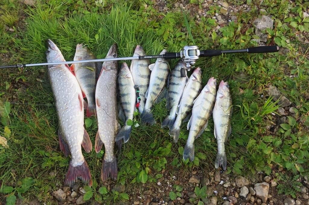 Рыбалка в коломенском районе московской области, рыбалка в коломне