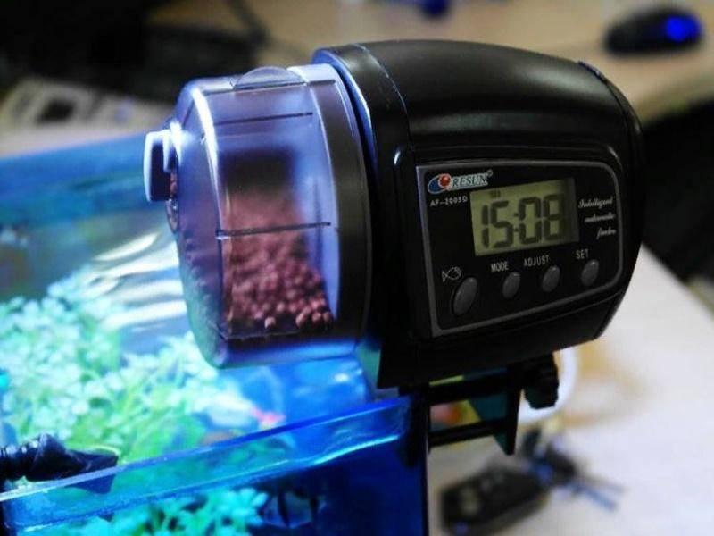 Автоматическая кормушка для аквариумных рыб: виды и варианты.
